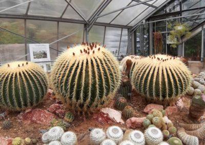 serre des cactus