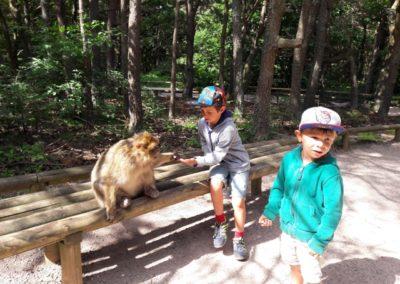 montagne des singes